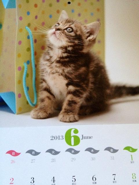 こねこカレンダー 2013_b0054042_14584539.jpg