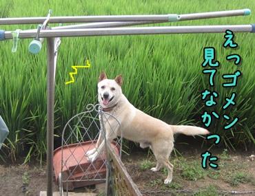 能天気な犬_b0151748_12242137.jpg