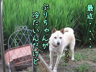 能天気な犬_b0151748_12242487.jpg