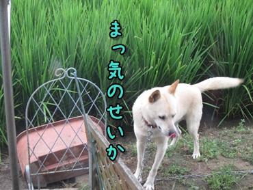 能天気な犬_b0151748_12361238.jpg