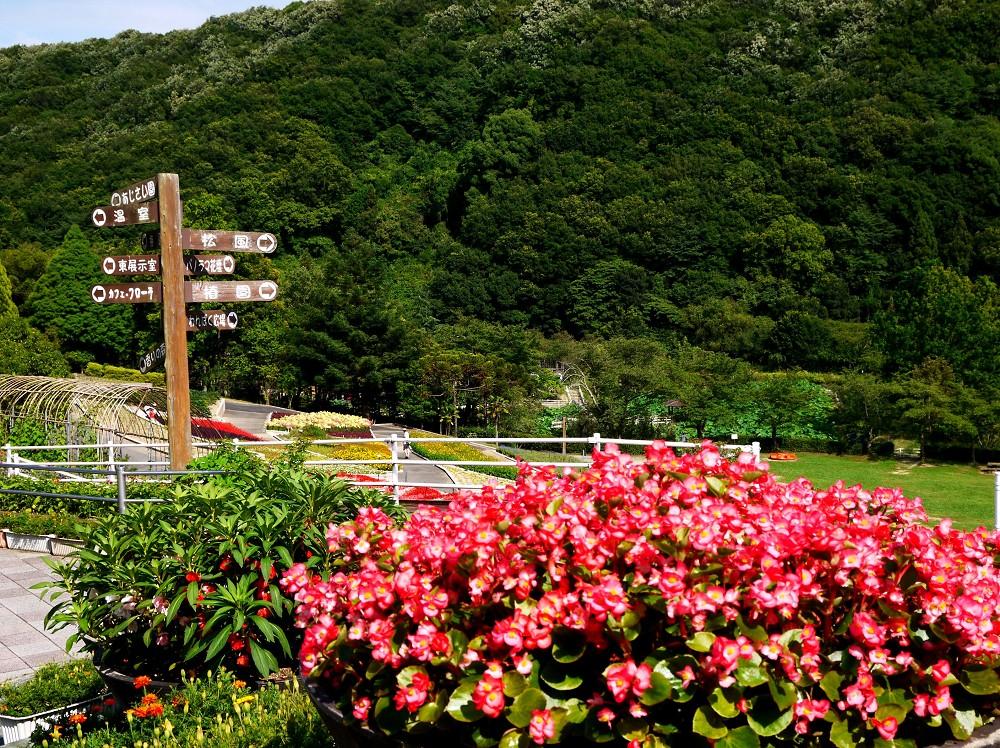 和歌山県植物公園緑花センター _b0093754_22561490.jpg