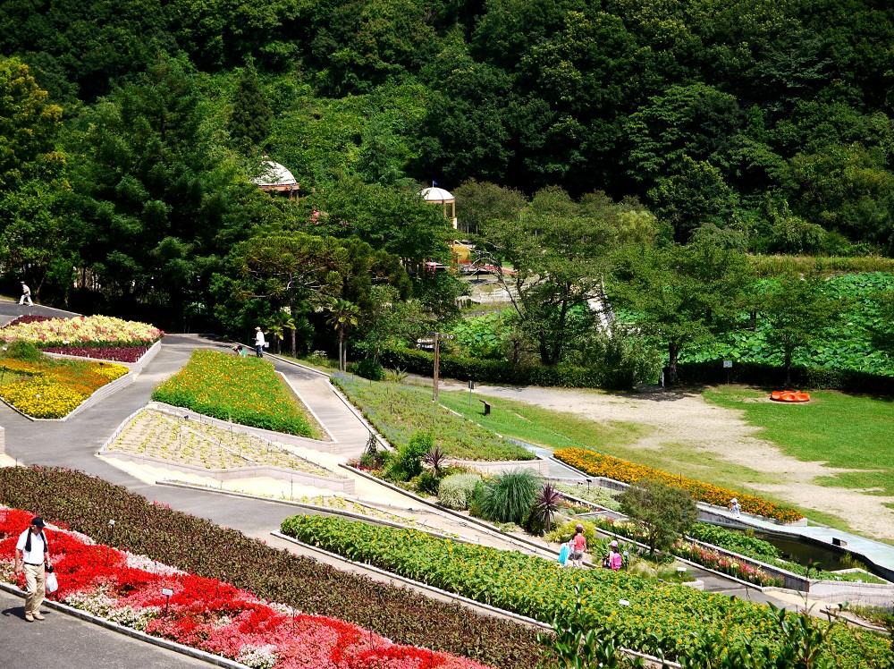 和歌山県植物公園緑花センター _b0093754_22563158.jpg