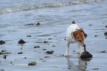 海藻とカモメ_d0143957_17532728.jpg