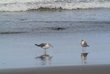 海藻とカモメ_d0143957_17535586.jpg