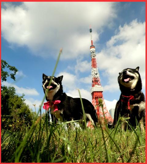 東京タワー、「 I  LOVE !」。_e0236072_1525634.jpg