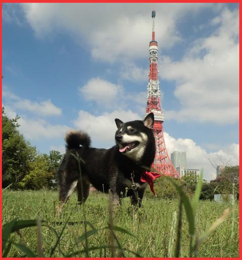東京タワー、「 I  LOVE !」。_e0236072_2111921.jpg