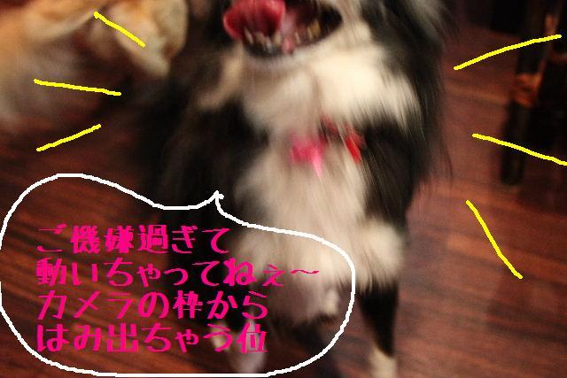 b0130018_930460.jpg