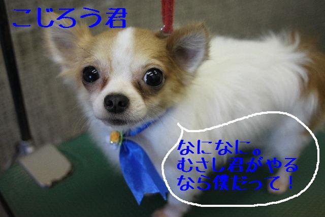 b0130018_9375699.jpg