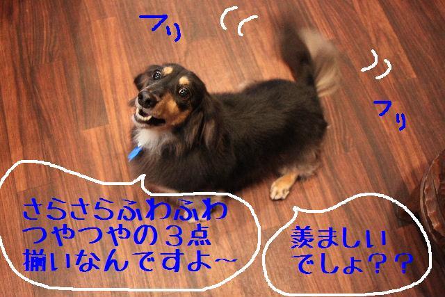 b0130018_9471594.jpg