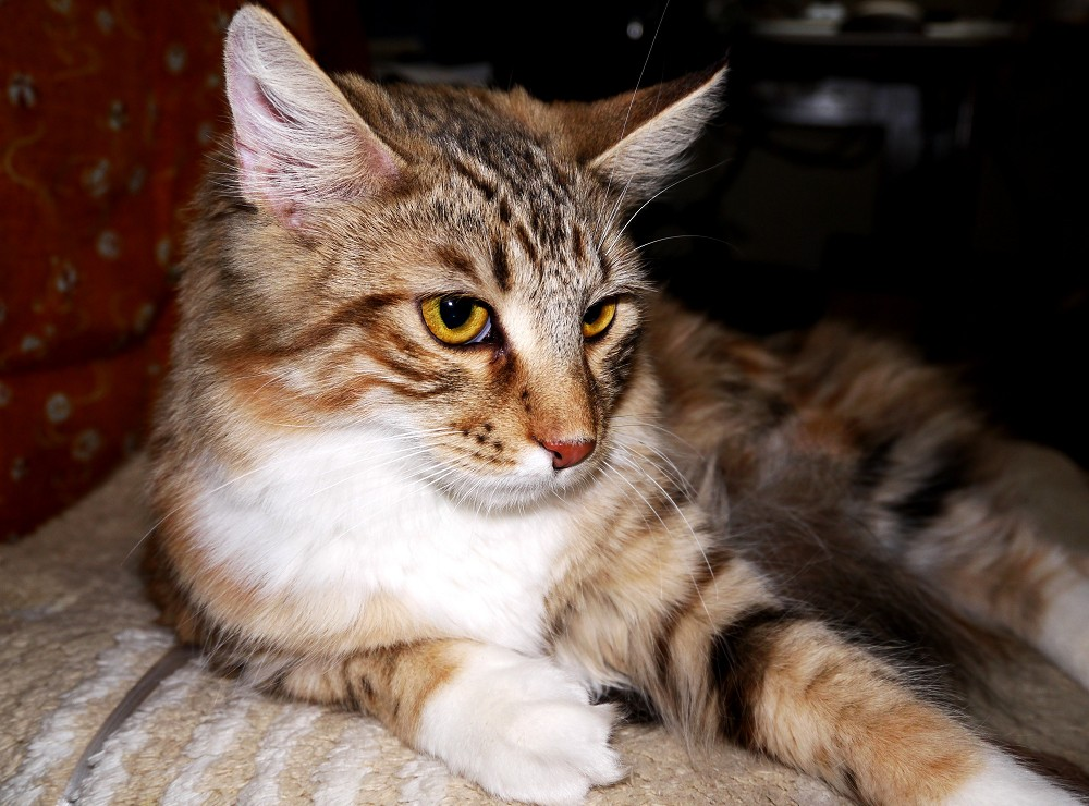 愛 猫_b0093754_23203531.jpg