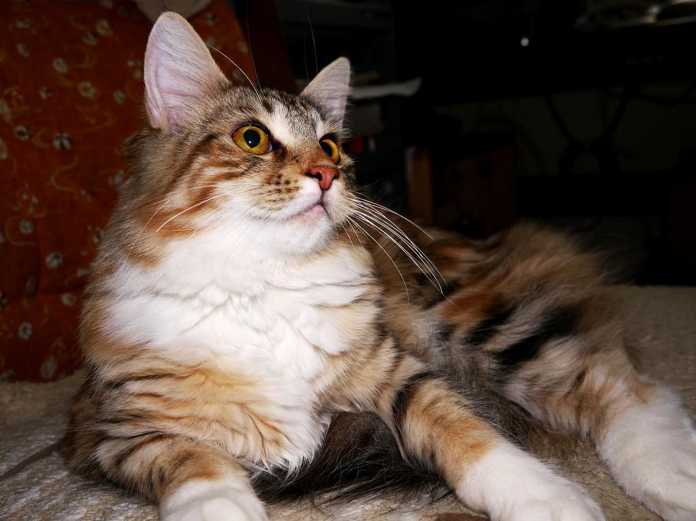 愛 猫_b0093754_23205634.jpg