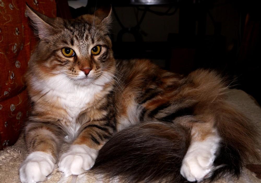 愛 猫_b0093754_23211762.jpg