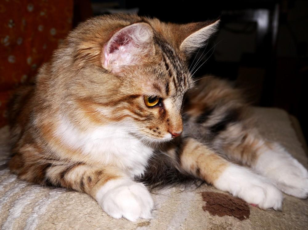 愛 猫_b0093754_2321585.jpg