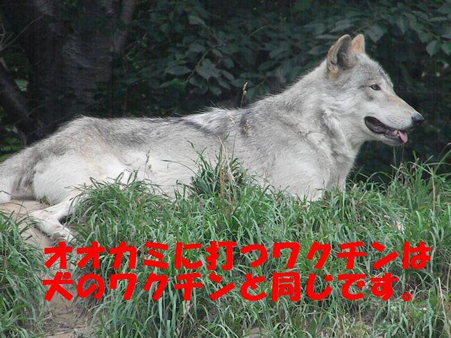 b0014576_21353138.jpg