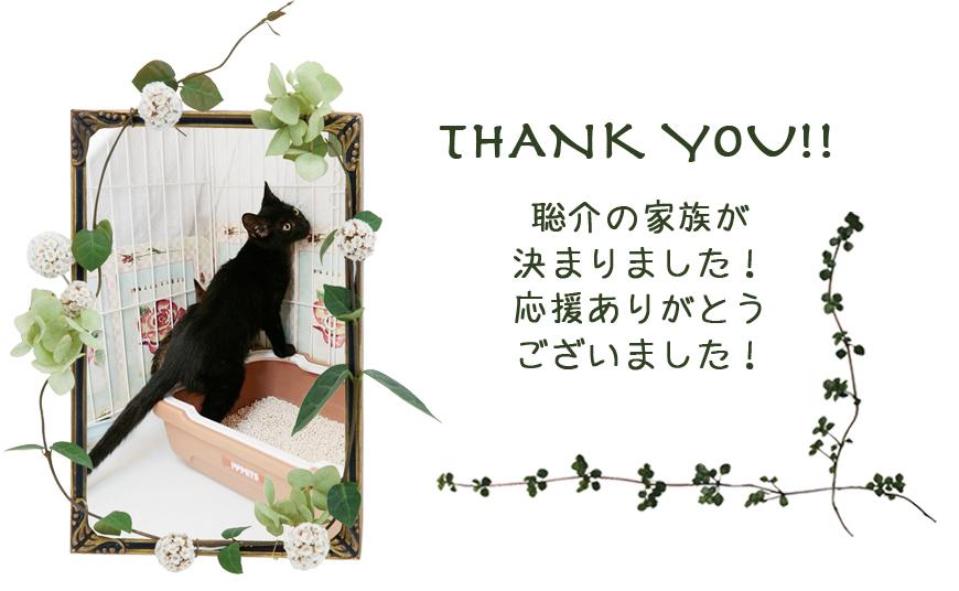 聡介&子猫_c0223478_20505498.jpg