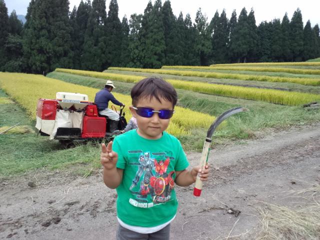 稲刈りシーズン真っ盛り!_f0101226_7385773.jpg