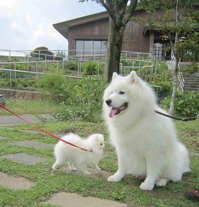 ターボくんと六甲山へ_b0177436_22532527.jpg