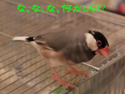 b0158061_21171783.jpg