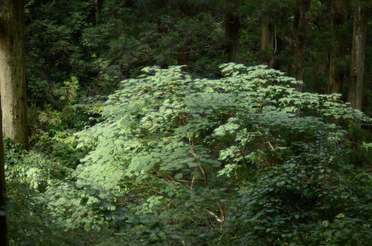 森の奥に忘れられた時間_b0194880_19362970.jpg