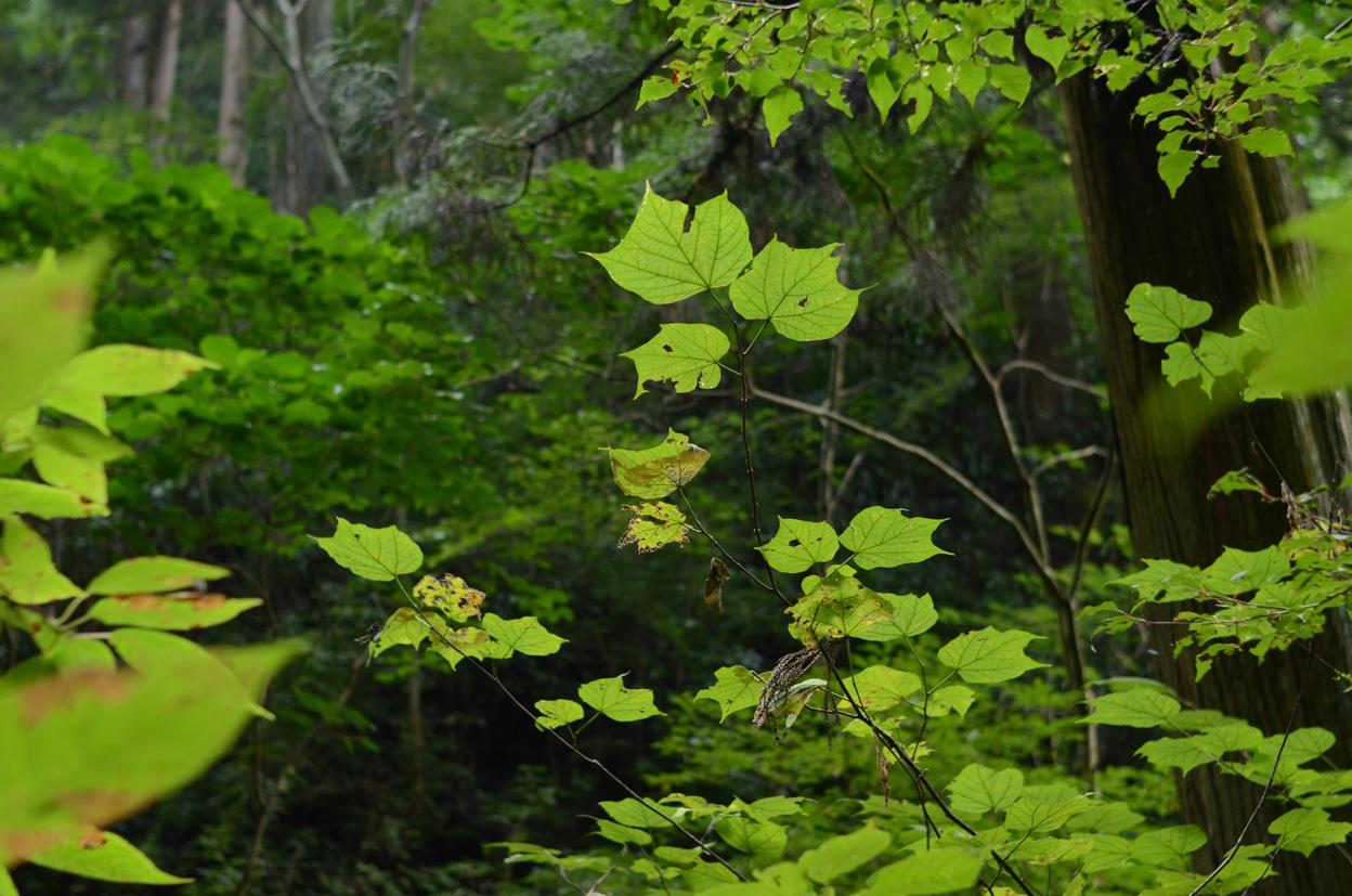 森の奥に忘れられた時間_b0194880_19363521.jpg