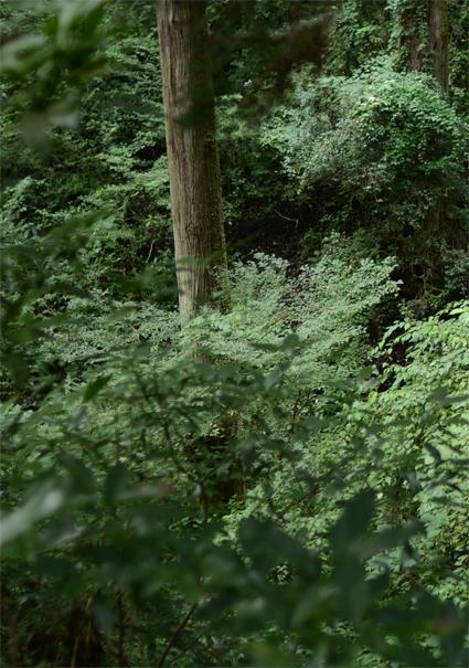 森の奥に忘れられた時間_b0194880_19374659.jpg