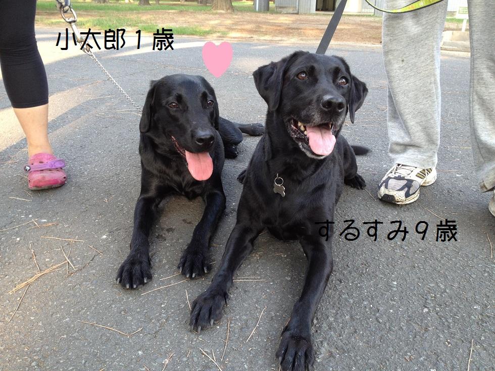小太郎の初川泳ぎ_e0244283_14442321.jpg