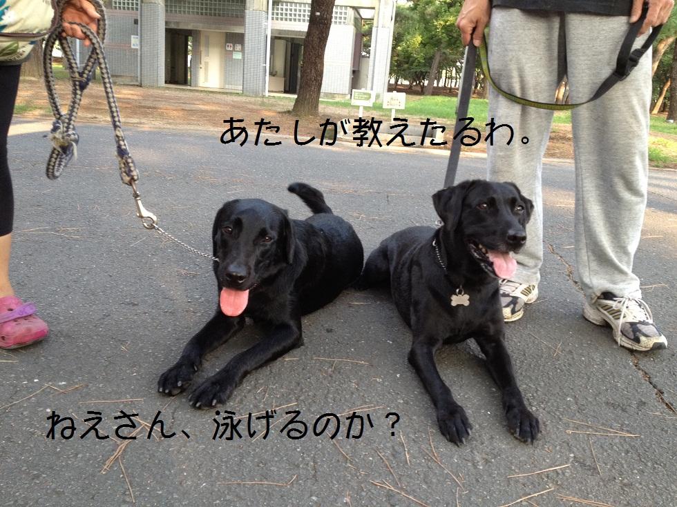 小太郎の初川泳ぎ_e0244283_1456286.jpg