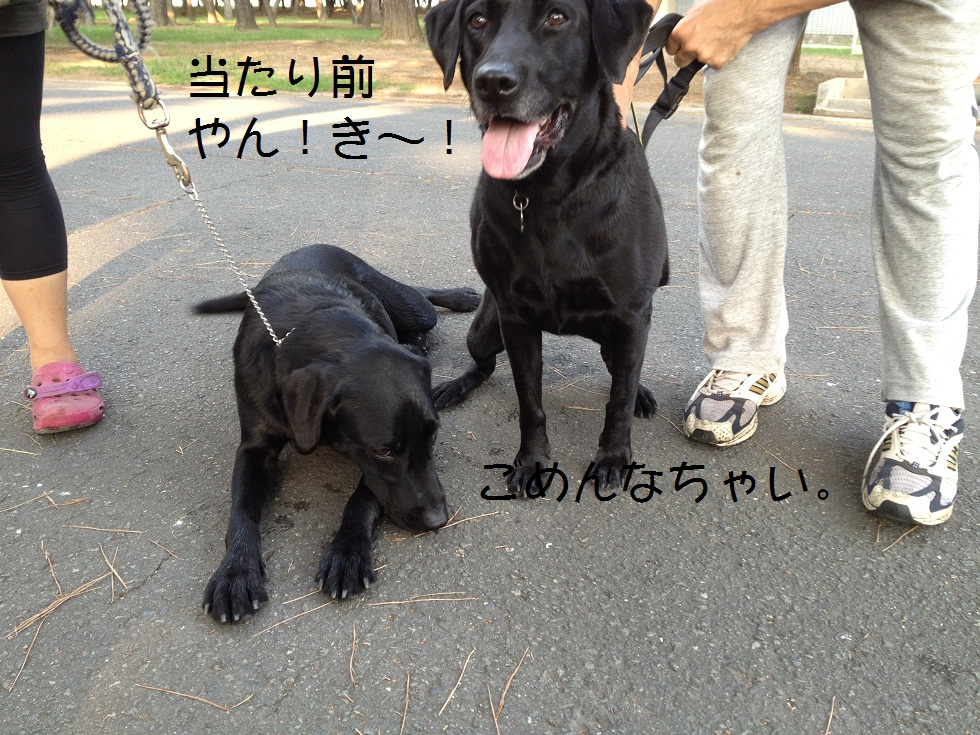 小太郎の初川泳ぎ_e0244283_14564985.jpg