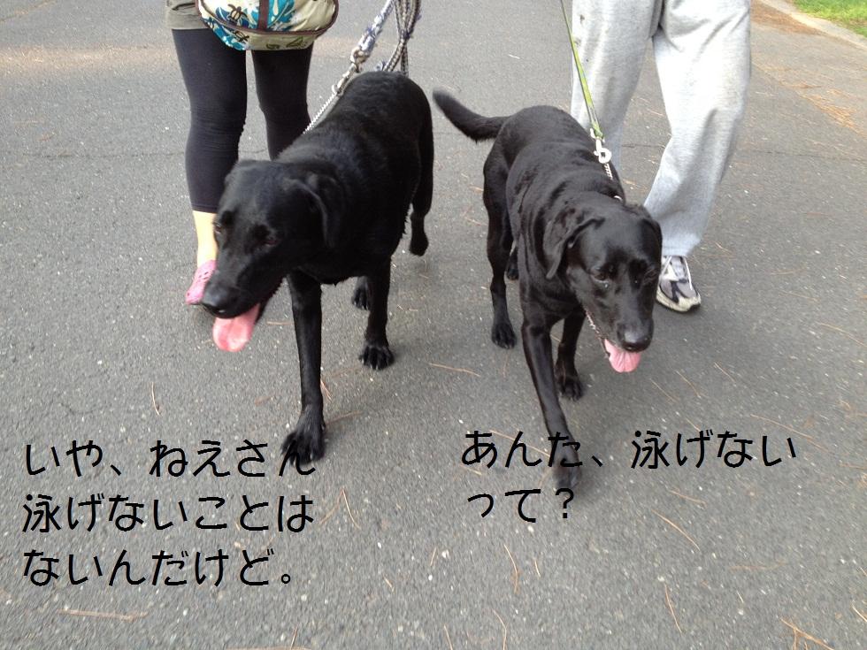 小太郎の初川泳ぎ_e0244283_1456826.jpg