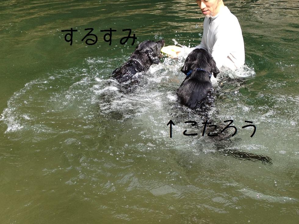 小太郎の初川泳ぎ_e0244283_14595521.jpg
