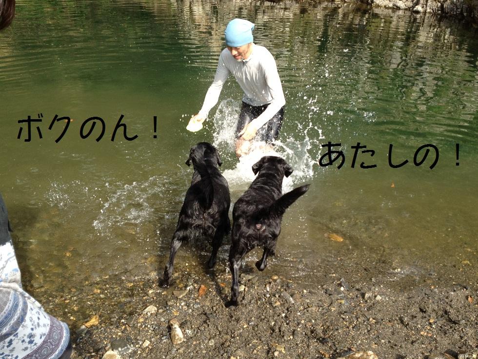 小太郎の初川泳ぎ_e0244283_1510189.jpg