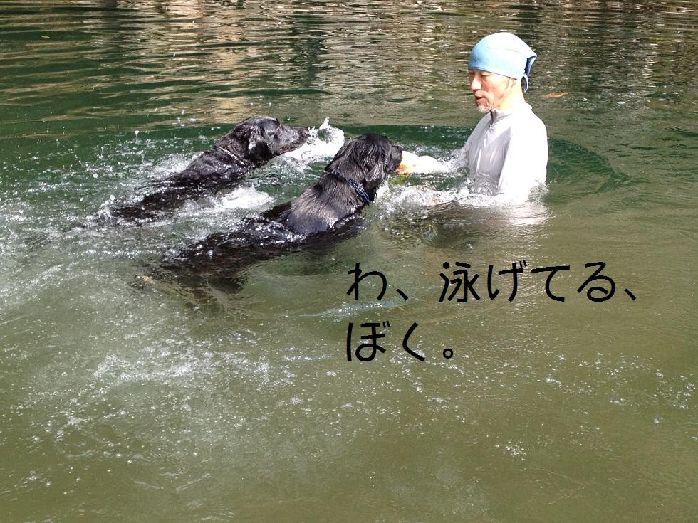 小太郎の初川泳ぎ_e0244283_15102649.jpg