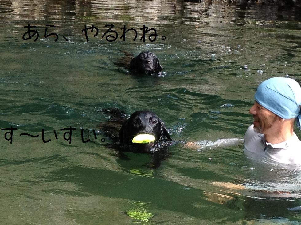 小太郎の初川泳ぎ_e0244283_15121356.jpg