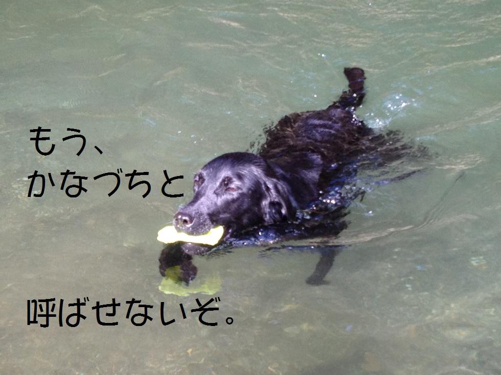 小太郎の初川泳ぎ_e0244283_15124772.jpg