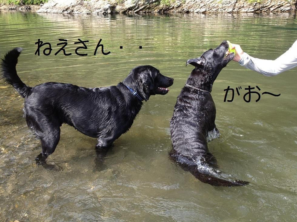 小太郎の初川泳ぎ_e0244283_15201424.jpg