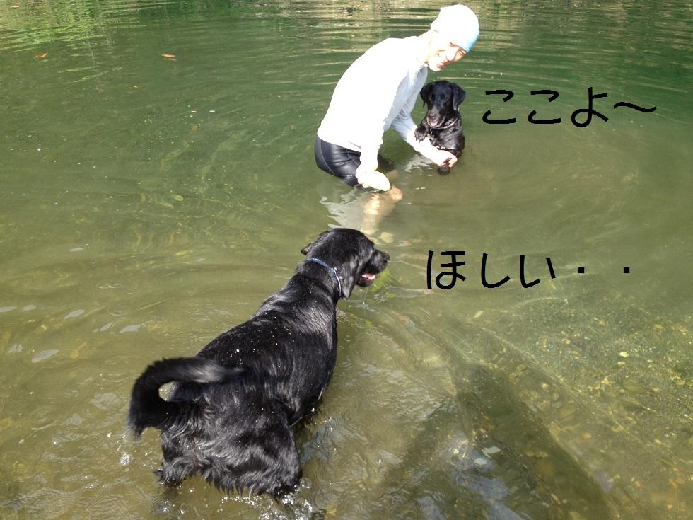 小太郎の初川泳ぎ_e0244283_1521287.jpg