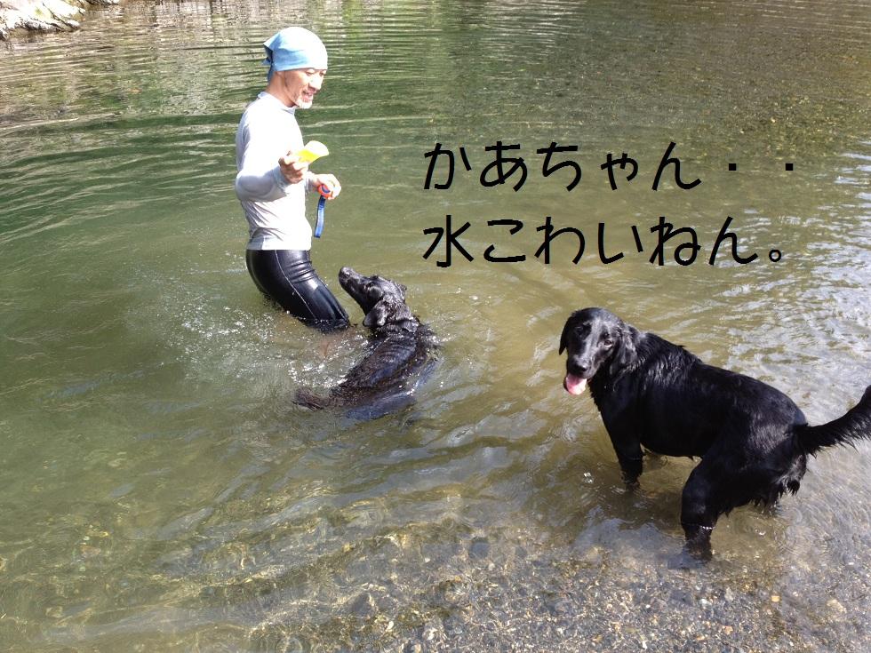 小太郎の初川泳ぎ_e0244283_152588.jpg
