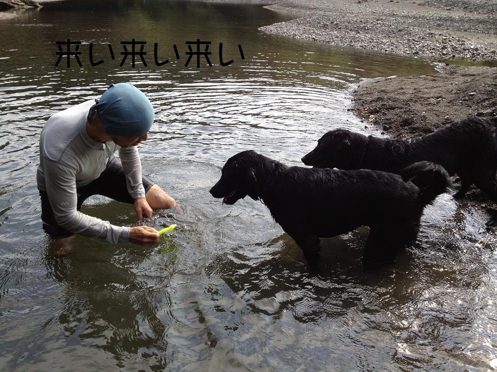 小太郎の初川泳ぎ_e0244283_1543063.jpg
