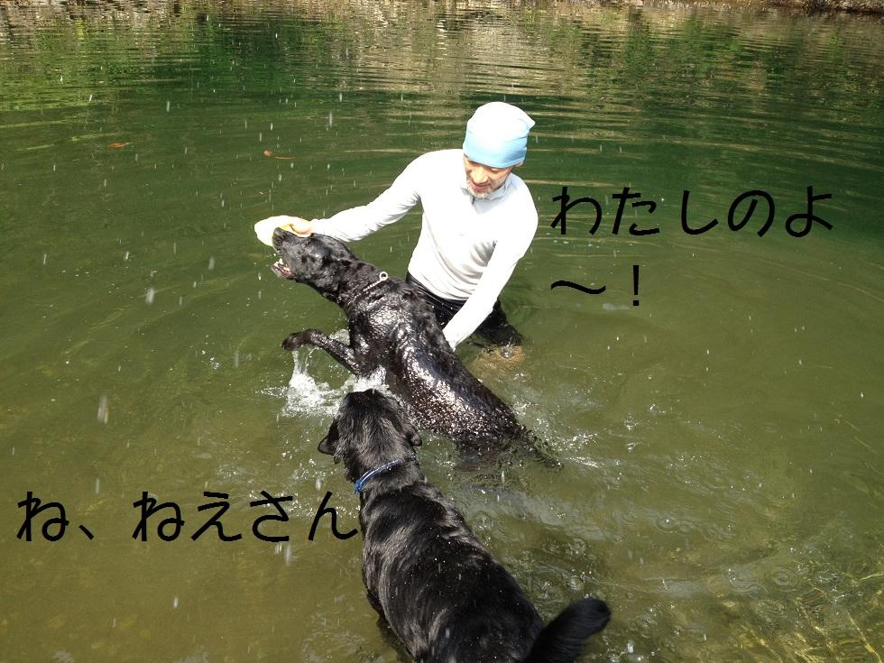 小太郎の初川泳ぎ_e0244283_154565.jpg