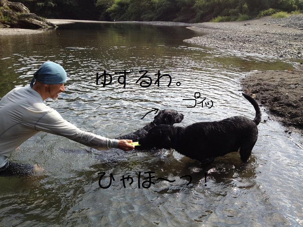 小太郎の初川泳ぎ_e0244283_1552622.jpg