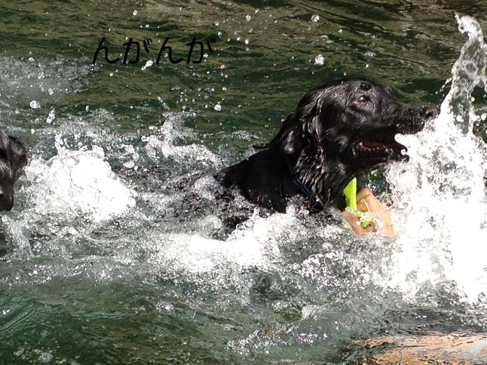 小太郎の初川泳ぎ_e0244283_1581782.jpg