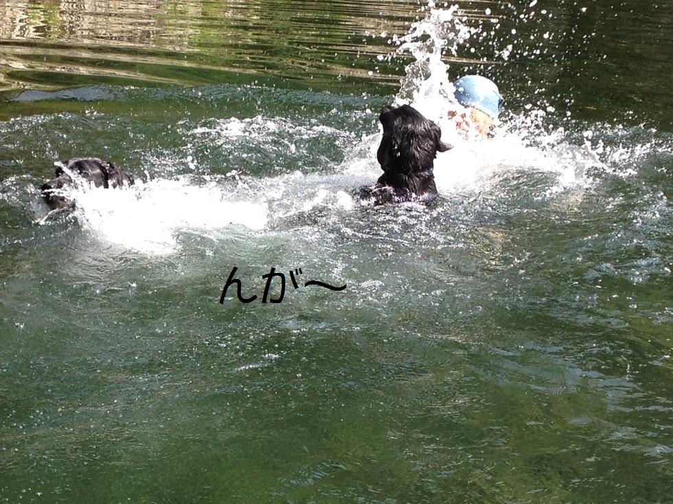 小太郎の初川泳ぎ_e0244283_1583880.jpg
