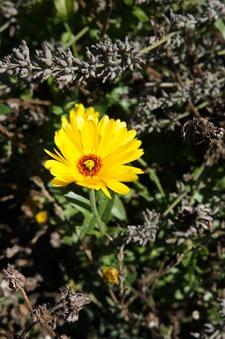 9月は第二の春です_f0106597_4392265.jpg