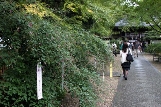 梨の木神社 萩まつり_e0048413_21203133.jpg