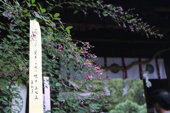 梨の木神社 萩まつり_e0048413_21205773.jpg