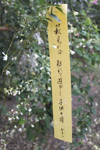 梨の木神社 萩まつり_e0048413_21211275.jpg