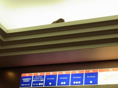 エレベータ内の鳥1