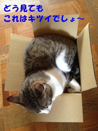 c0194551_16431612.jpg