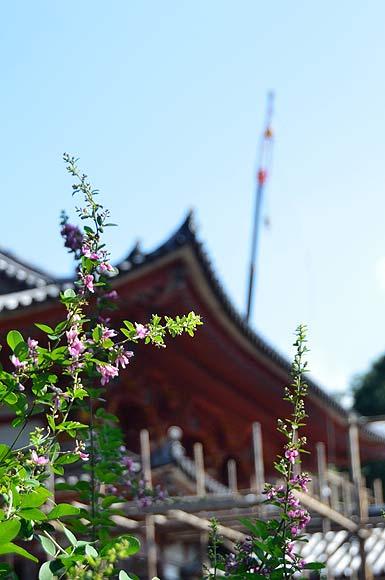 国宝平等院鳳凰堂 平成の修理_e0164563_15455087.jpg
