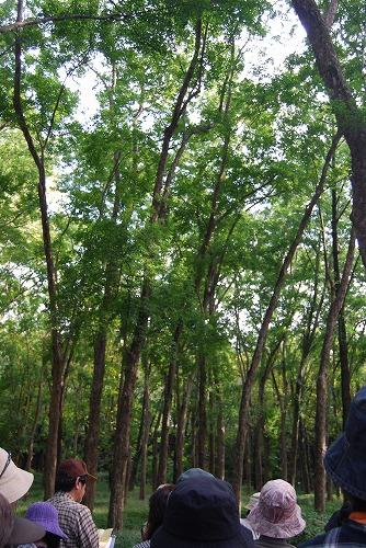狭山公園ガイドウォーク_c0124100_23501242.jpg